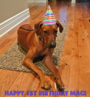 happy 1st birthday mac
