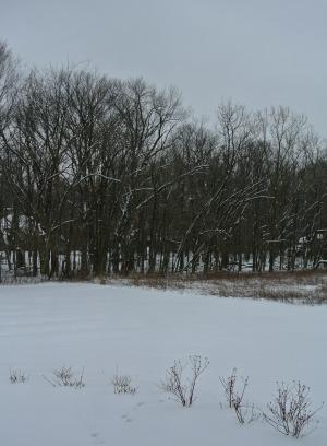 snow feb 2
