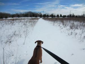 Tracks walk