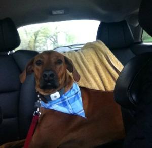 back seat mac