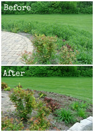before and after weeds 2a