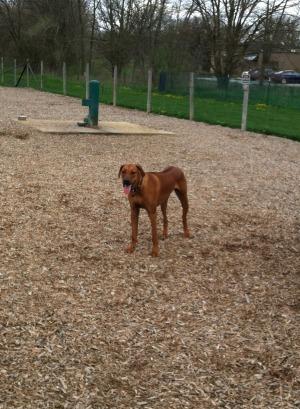 mac dog park