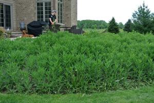 weeds 4